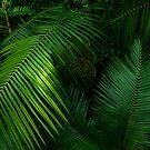 «Sábado de palma» de PictureNZ