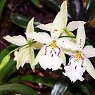 Beallara Tropic Lily Orchid by Jason Pepe