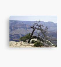 Grand Canyon - South Face Metal Print
