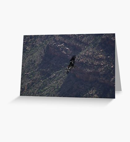 Grand Canyon - Vulture in Flight Greeting Card