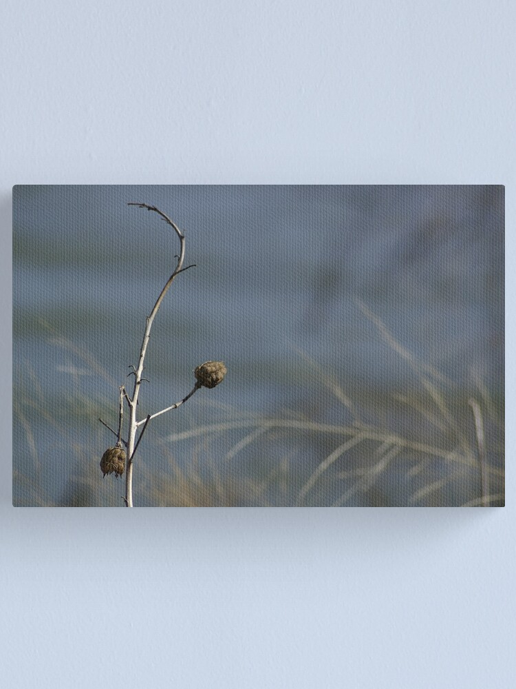 Alternate view of Flower Pods Canvas Print