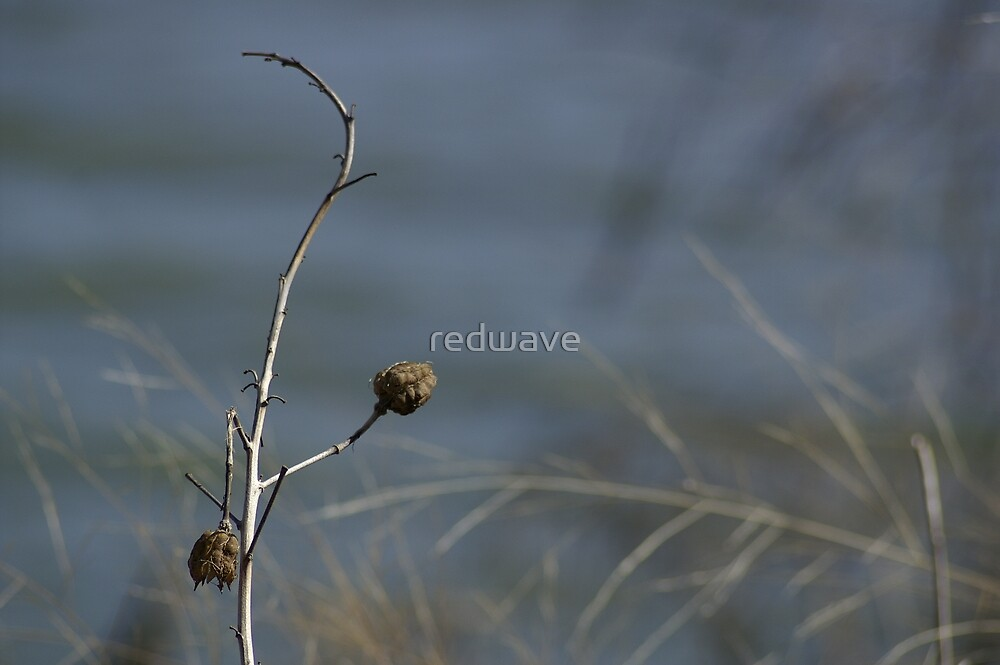 Flower Pods by redwave