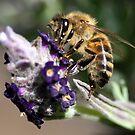 Bee by Sangeeta