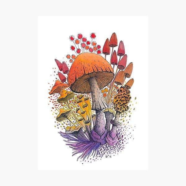 Mushroom Composition #1 | Watercolor Illustration Photographic Print
