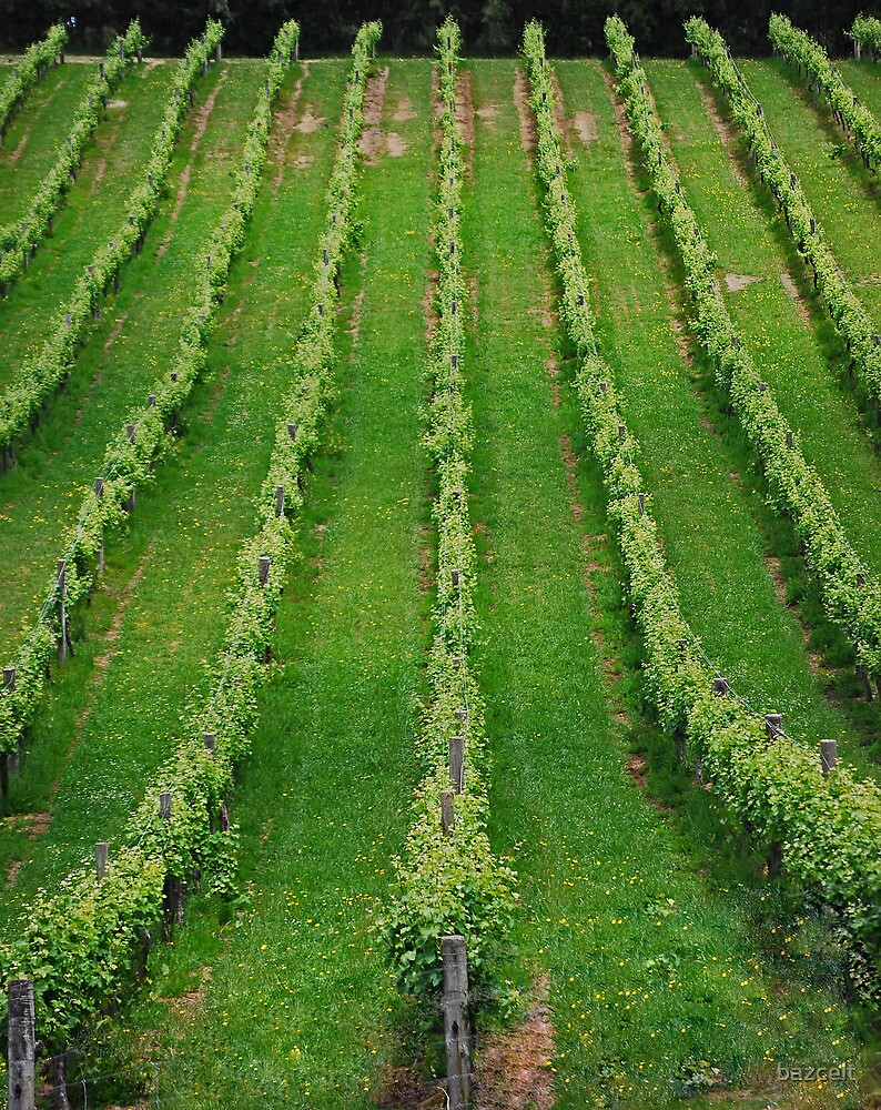 Wine Lines by bazcelt