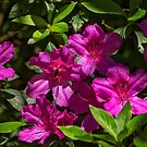 Ein paar Blumen von TJ Baccari Photography