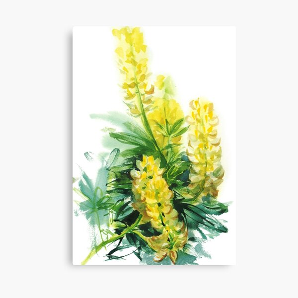 yellow lupines, watercolor sketch from nature Canvas Print