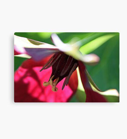 Wonderful Red Trillium Canvas Print