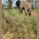 Elephant by Yves Roumazeilles