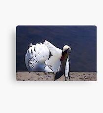 Astley Swan #1 Canvas Print
