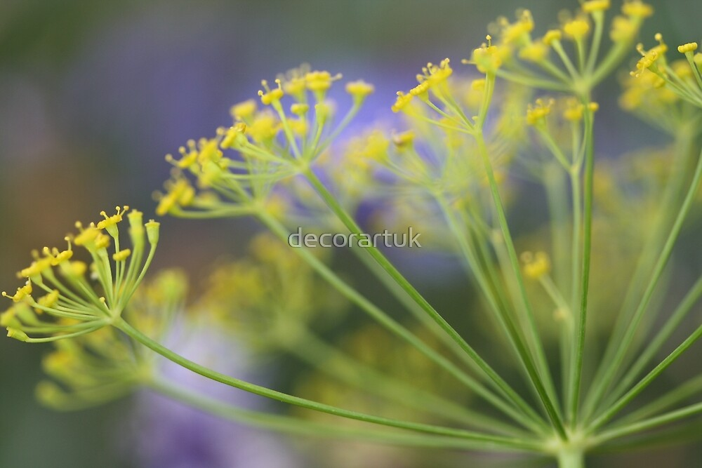 Dill Umbrella by decorartuk