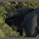 Elephant, ear by Yves Roumazeilles