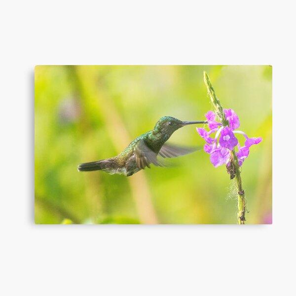 Nature's bird feeder Metal Print