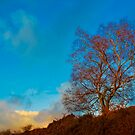 Solitary tree by Thomas Tolkien