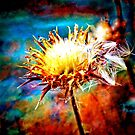 Thistles and Rust by Marklin Fleshman