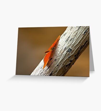 Butterfly on bark Greeting Card