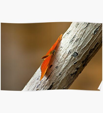 Butterfly on bark Poster