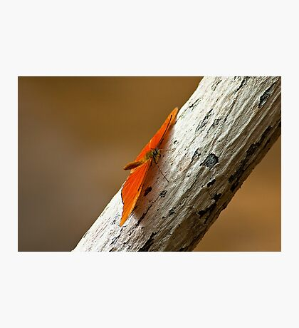 Butterfly on bark Photographic Print