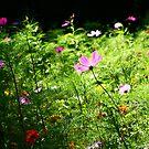 Wildflowers by lallymac