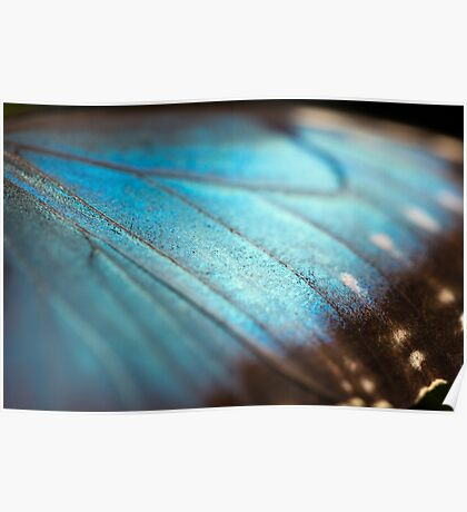 Wings of pure blue Poster