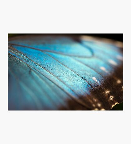 Wings of pure blue Photographic Print