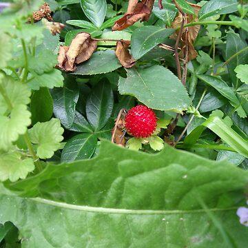 Wild Strawberry by RagingRawr