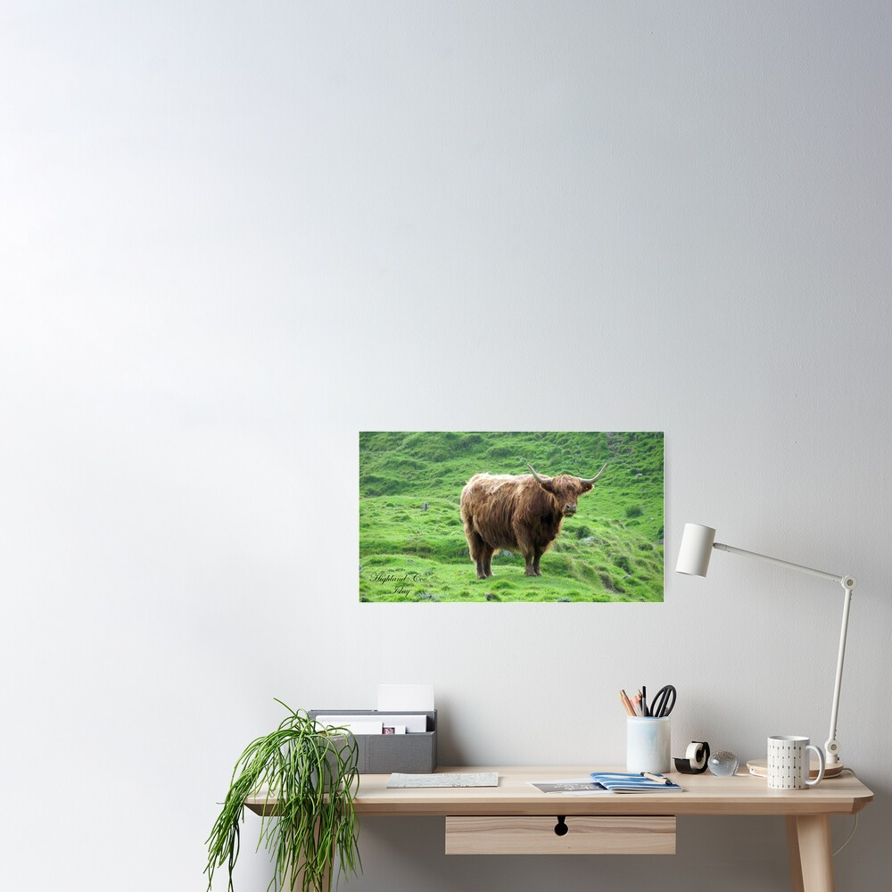 Highland Coo Poster