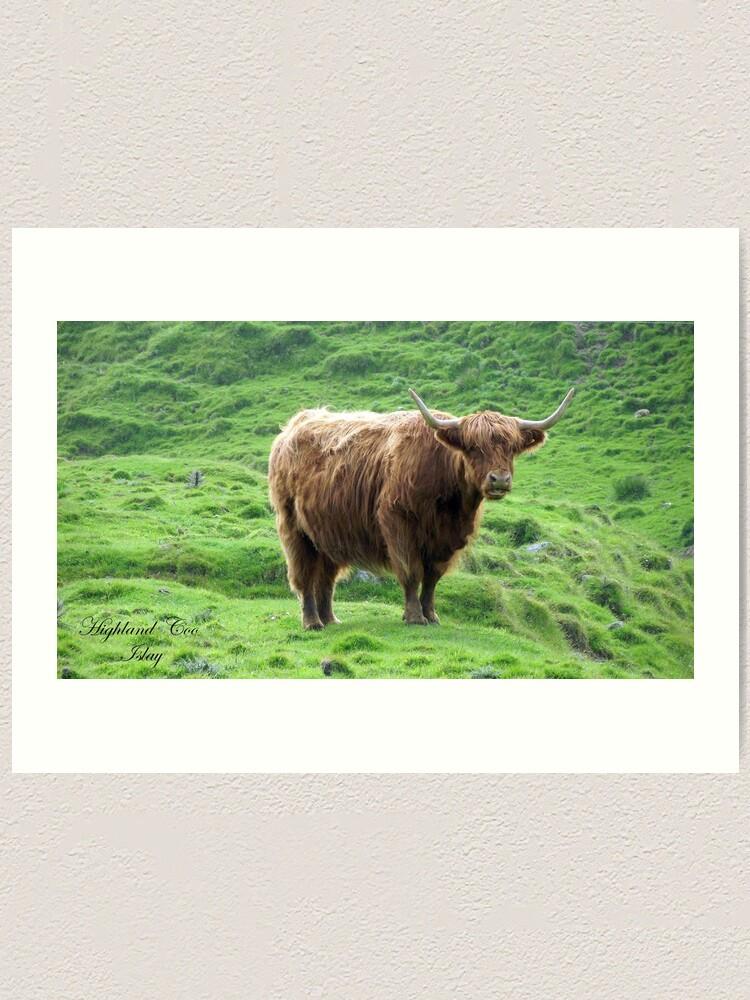 Alternate view of Highland Coo Art Print