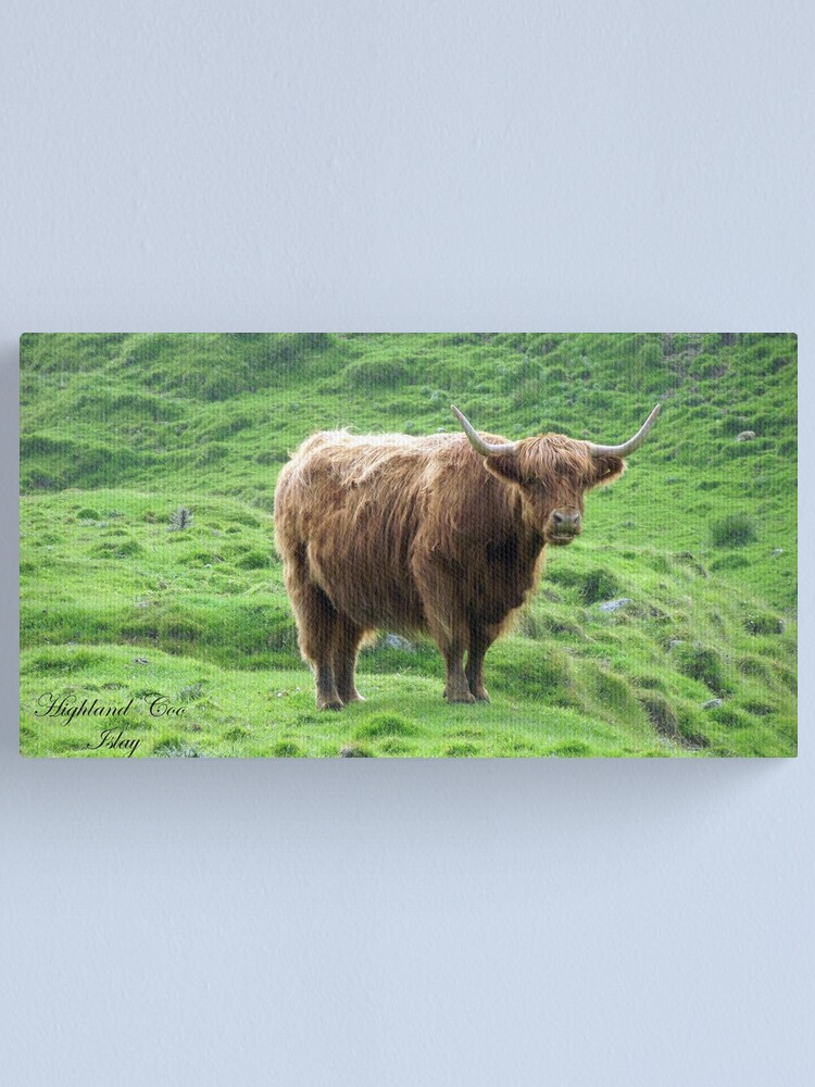 Alternate view of Highland Coo Canvas Print