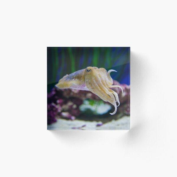 Cuttlefish Shrug Acrylic Block