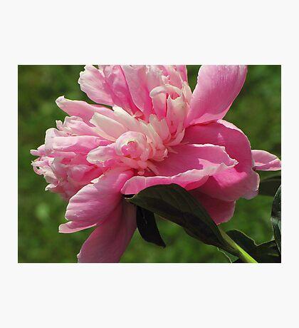 Garden Dancing Photographic Print