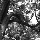 Twisting Branches by RodriguezArts