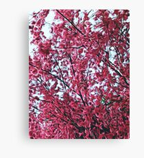 Magical Cherry Blossoms - Dark Pink Floral Abstract Art - Springtime Canvas Print