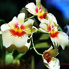 Orchid Chorus by Mattie Bryant