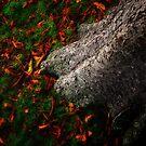 Stump & Leaves by Simon Duckworth
