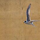 Bird in flight, henley Beach Adelaide SA by henleyhelen