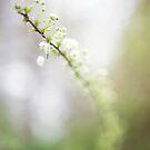 Weich blühen von Kendra Kantor