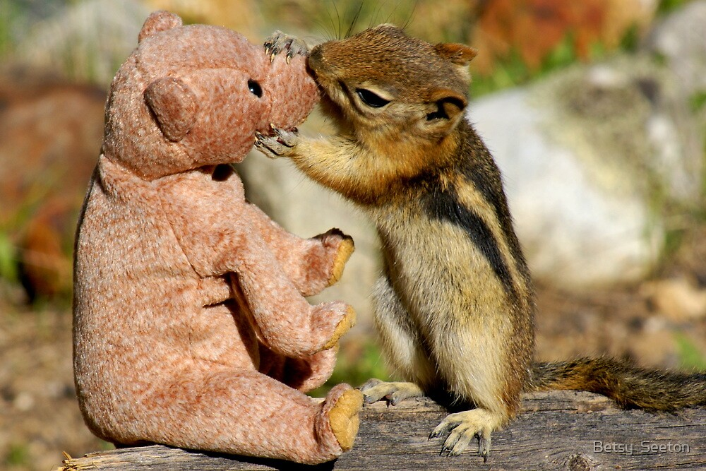 Jasper Really Likes His New Friend by Betsy  Seeton