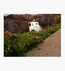 Tidal Pool and Sea Roses Photographic Print