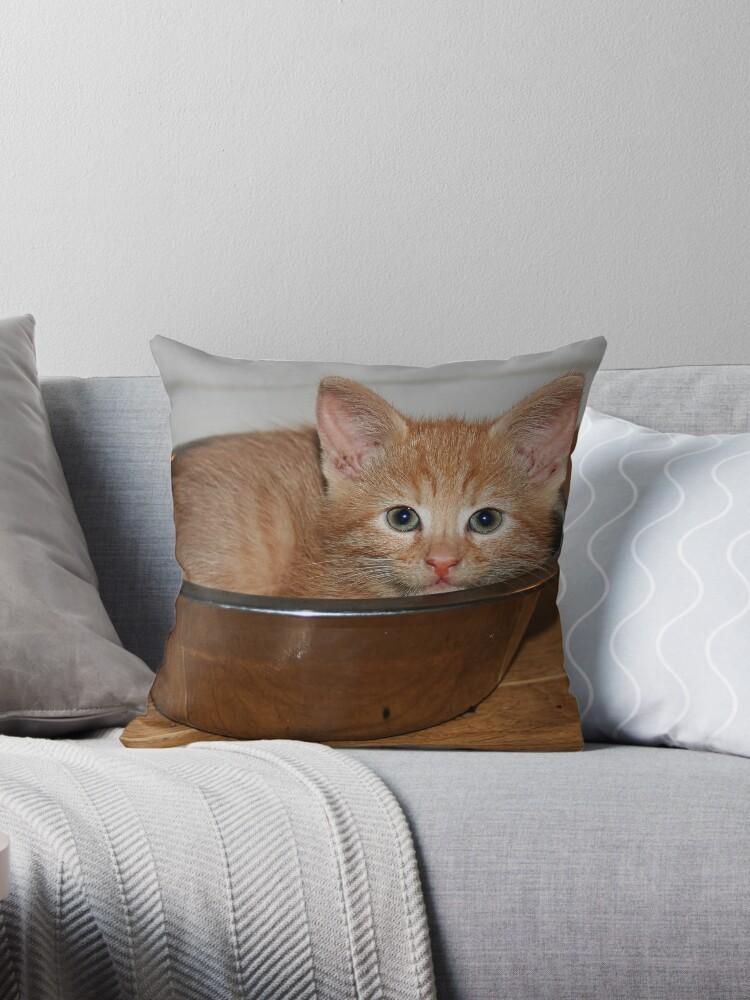 Kitten in a Bowl by Jo Nijenhuis