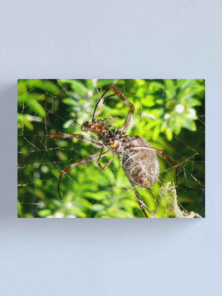 Alternate view of Under Belly Canvas Print