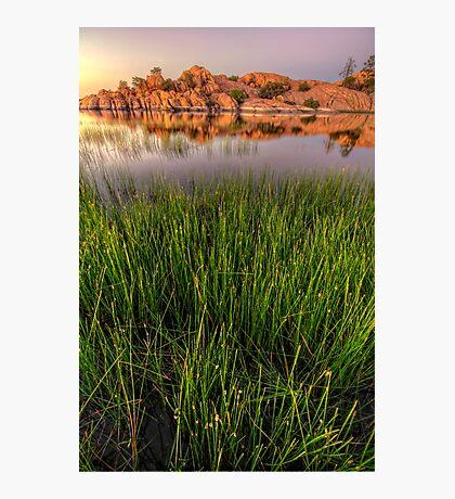 The Secret Life of Grass Photographic Print