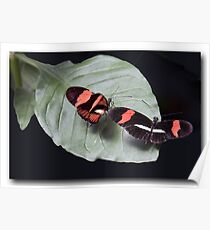 Butterflies chat  Poster