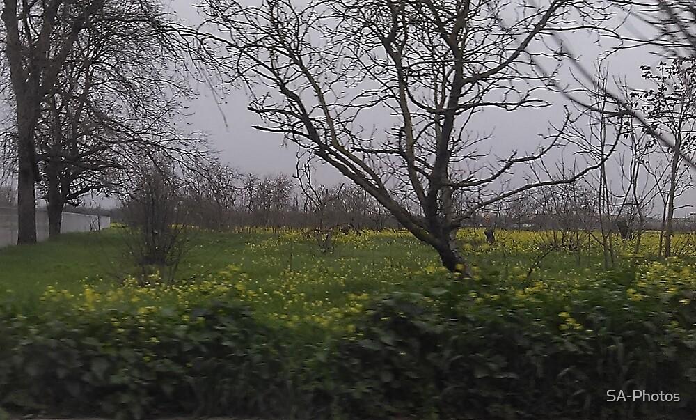 Flower Field by SA-Photos