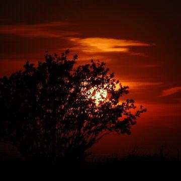 Sunset bush by nakedlunch02