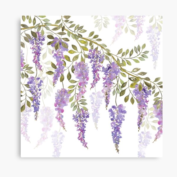 Wisteria Blossoms Canvas Print