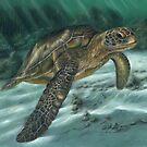 Sea Turtle  by Richard Macwee