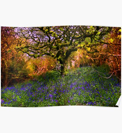 Bluebells And Tree Poster