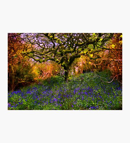Bluebells And Tree Photographic Print
