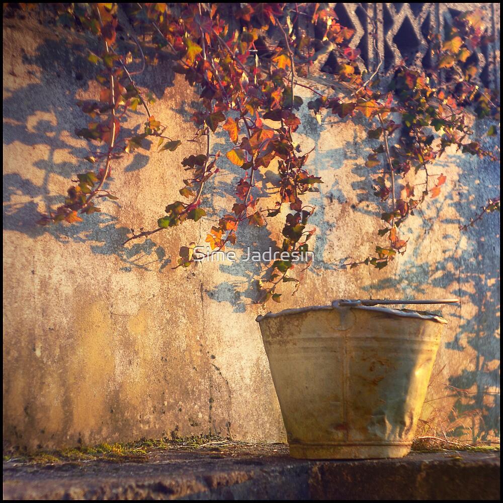 Fall. by Sime Jadresin